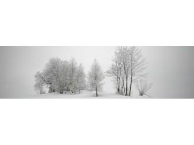 Понятие зимостойкости и морозоустойчивости растений