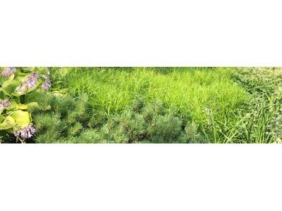 Производственный опыт применения биопрепаратов по защите растений в коттеджных поселках.