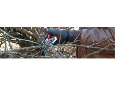 Обрезка садового жасмина